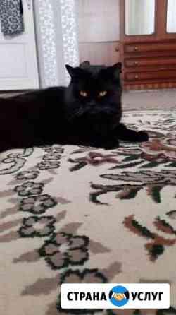 Кошка на вязку Махачкала