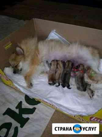 Роды, выкармливание щенков Челябинск