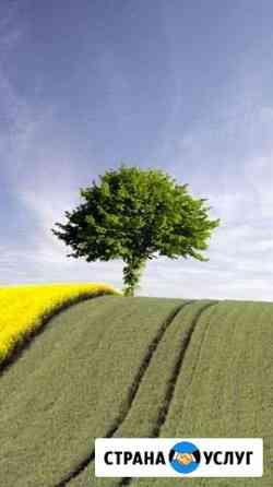 Покос травы Сыктывкар