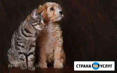 Передержка кошек и собак на время Вашег Казань