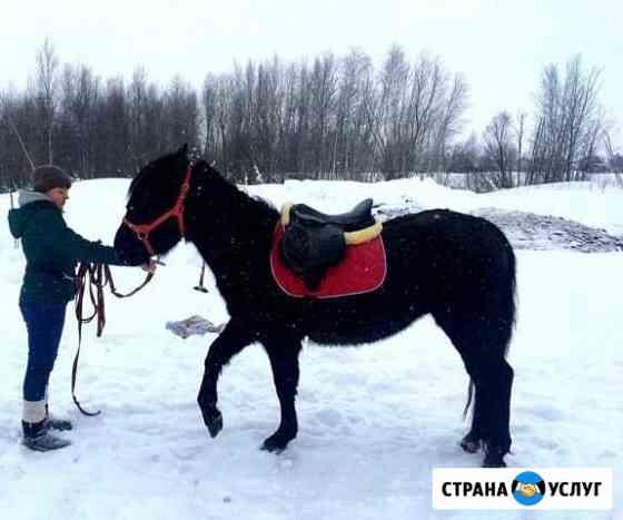 Аренда лошади для фотосессии Нижневартовск