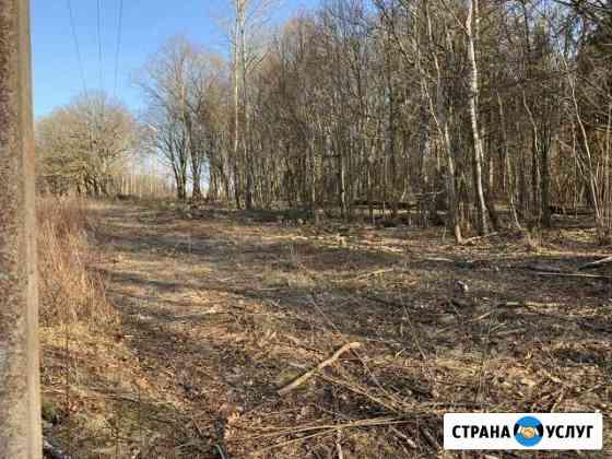 Услуги по уходу и обрезке деревьев и кустарников Калининград