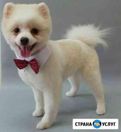 Стрижка котов и собак Краснодар