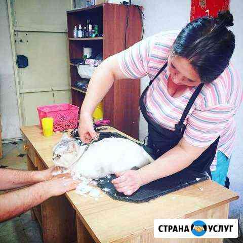 Стрижки собак и кошек Будённовск