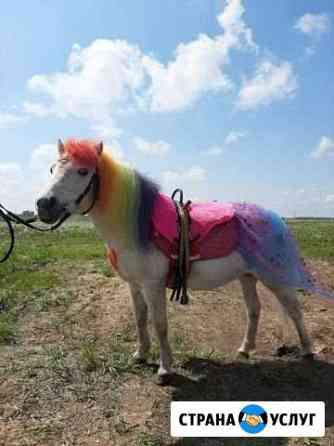 Пони,лошадь,ослик,карета на праздники Йошкар-Ола