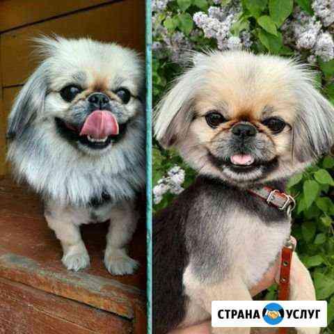 Стрижки кошек и собак Октябрьский