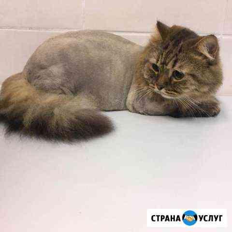 Стрижка кошек (котов ) Калуга