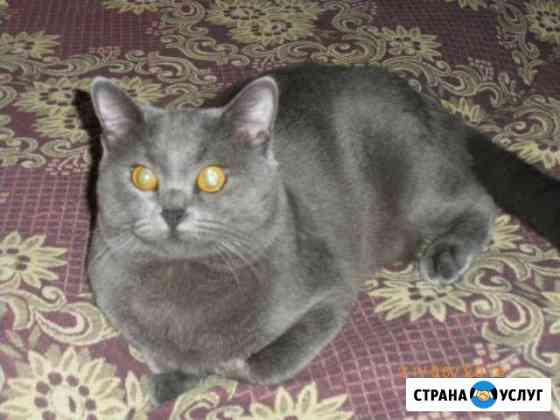 Вязка кота Елец