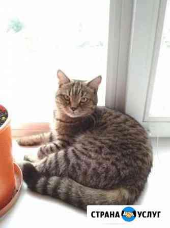 Передержка домашних кошек, птиц Вологда