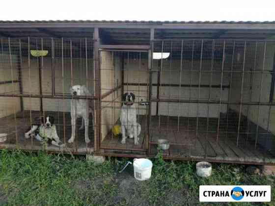 Передержка собак вольерное содержание Тамбов