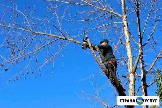 Спиливание деревьев Маркова