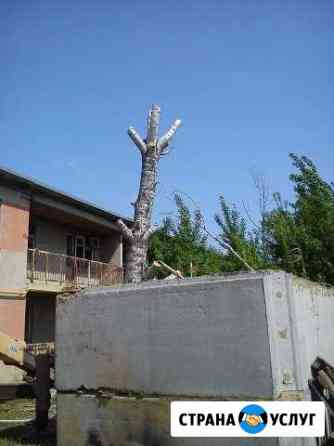 Спил деревьев Саратов