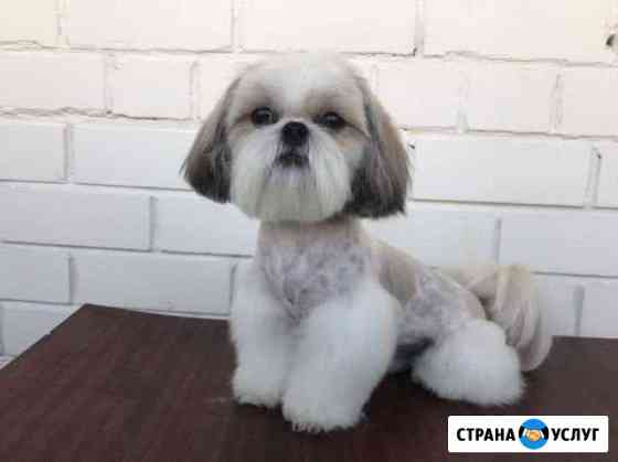 Стрижка кошек и собак, тримминг, читать описание Барнаул
