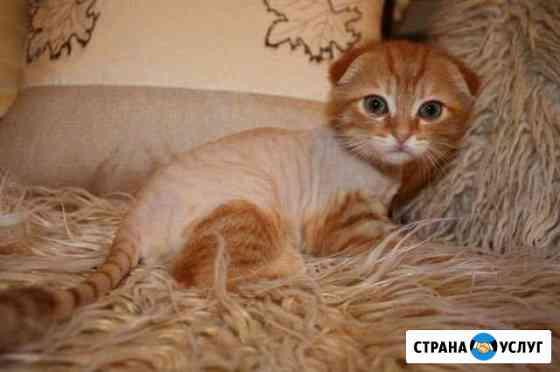 Стрижка кошек и собак без наркоза Белорецк