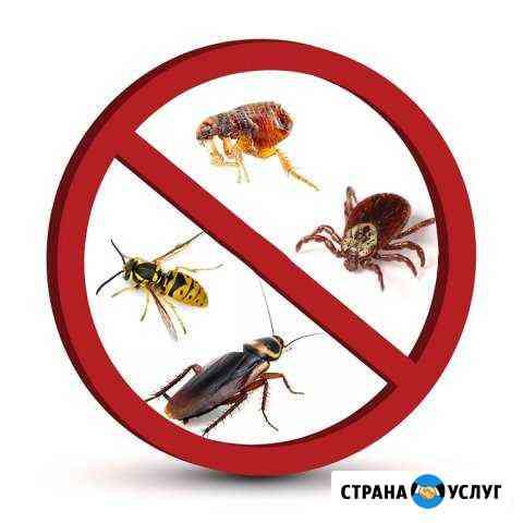 Уничтожение клопов, тараканов, муравьев Ижевск