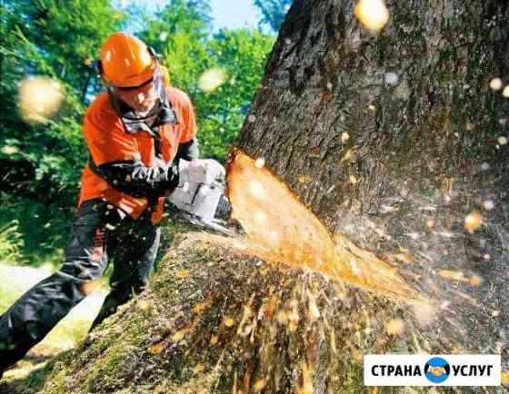 Спил деревьев любых размеров по частям Абакан