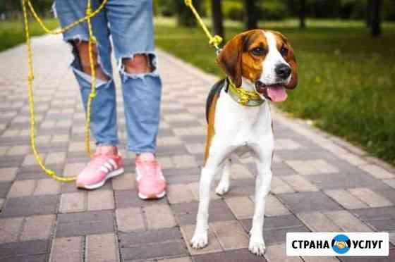 Выгул собак Брянск