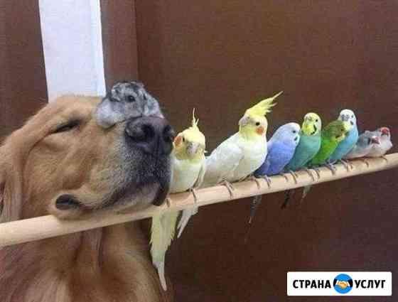 Ветеринарная помощь Барнаул