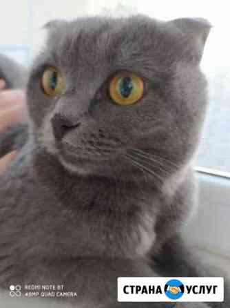 Передержка кошек Альметьевск