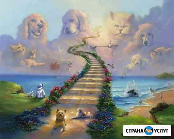 Усыпить кошку(собаку) на дому.Кремация животных Воронеж
