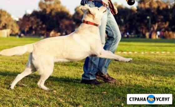 Выгуливать собак Нефтекамск