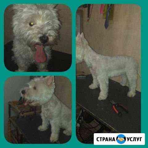 Стрижка собак и кошек Краснодар