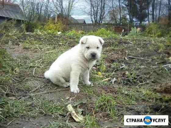 Гостиница для собак Пермь