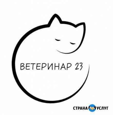 Стерилизация и кастрация кошек и котов на дому Гиагинская