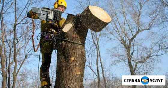 Спил деревьев Хабаровск