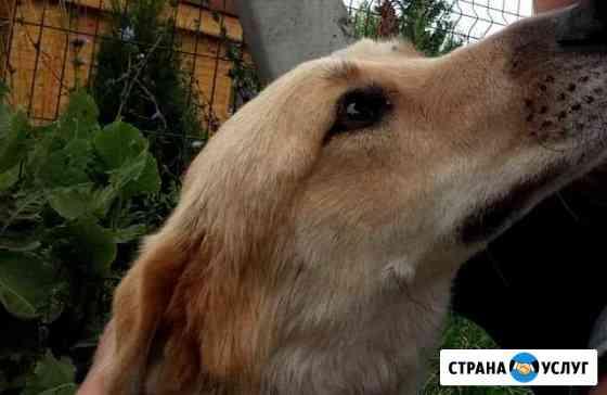 Выгул собак Казань