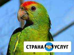 Передержка птиц Краснодар