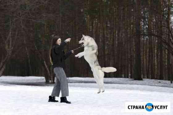 Показ собак на выставках Хендлер Пермь Пермь