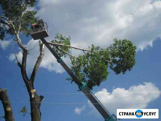 Опиловка деревьев Вологда