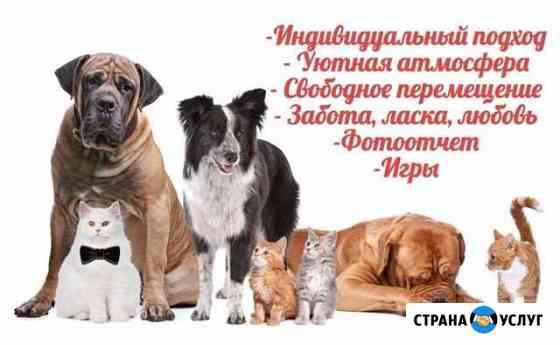 Зоогостиница - Оскар. Домашняя передержка животных Санкт-Петербург