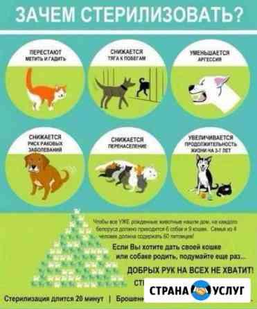 Стерилизация животных Брянск