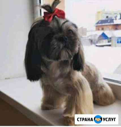 Стрижки животных Оренбург