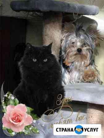 Гостиница-Передержка для кошек и маленьких собак Екатеринбург