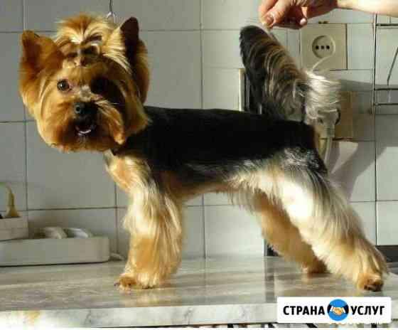 Стрижка собак и щенков разных пород Санкт-Петербург