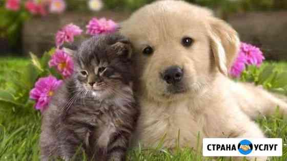 Передержка собак и кошек Калуга