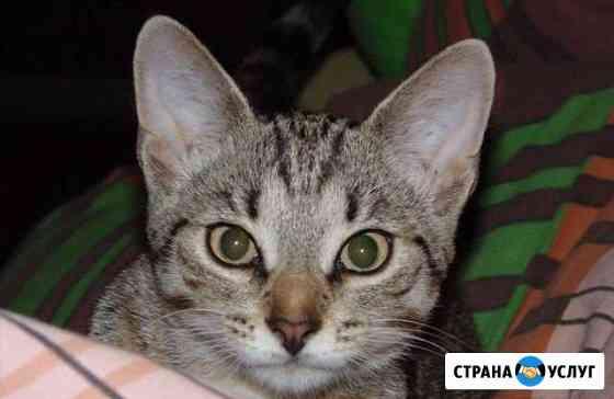Выгул домашнего животного Рыбинск