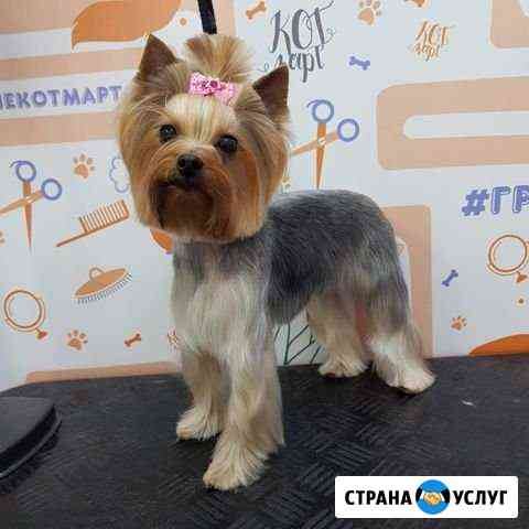 Стрижка собак и кошек. Тримминг. Креатив. Груминг Новосибирск