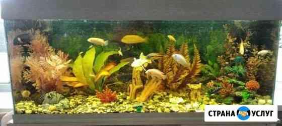 Обслуживание аквариумов Волжский