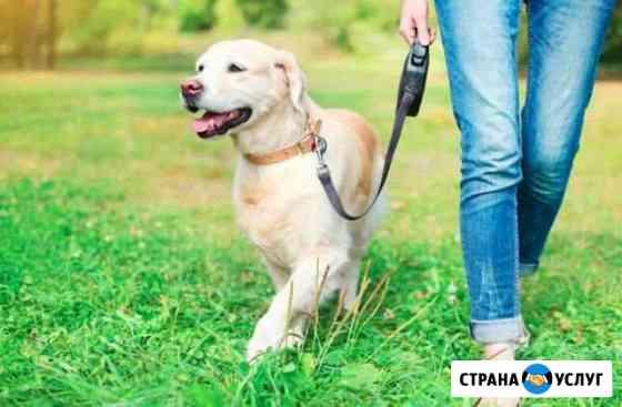 Выгул собак Димитровград