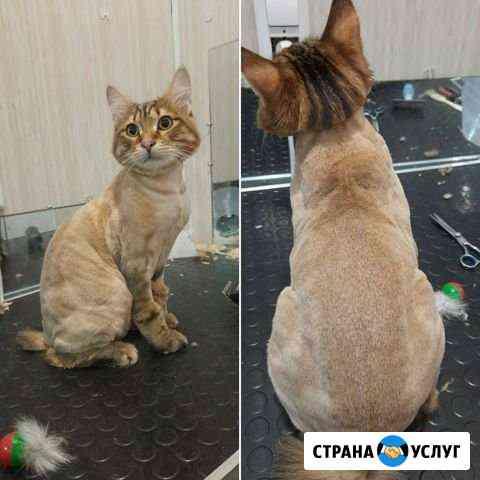 Стрижка собак и кошек Ставрополь