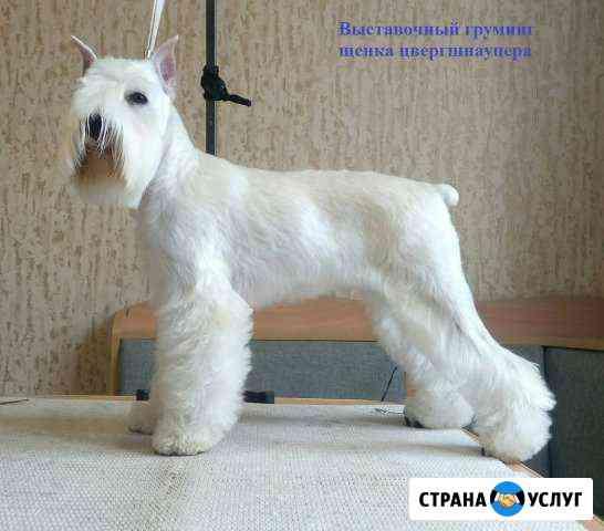 Тримминг, стрижка собак Красноярск