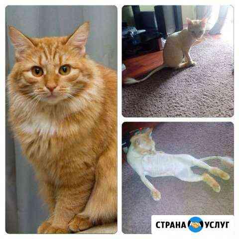 Стрижка кошек у вас на дому Казань