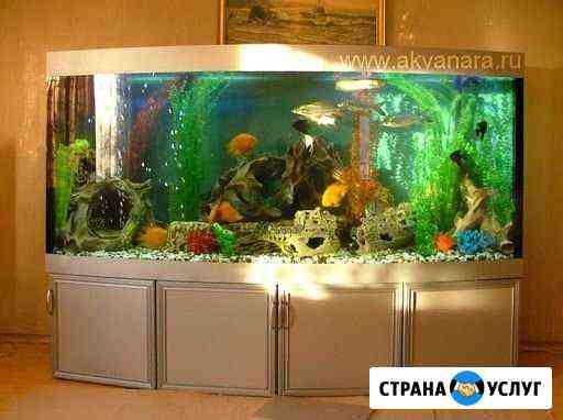Обслуживание аквариума. Оформление аквариума Воронеж