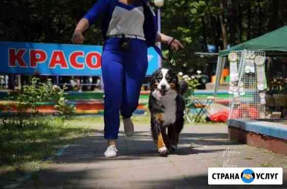 Хендлер Белгород