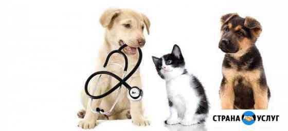 Ветеринарная помощь Приволжск