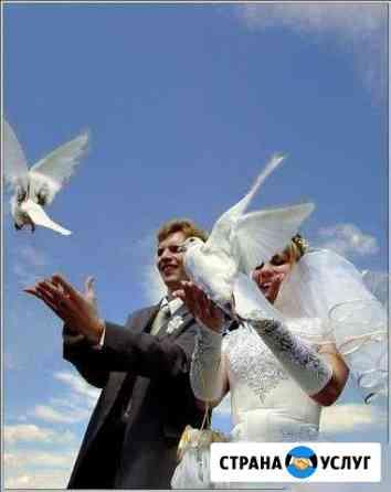 Голуби на свадьбу Саранск